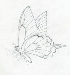 butterflies drawings make butterfly sketch quickly and easily speed is the key