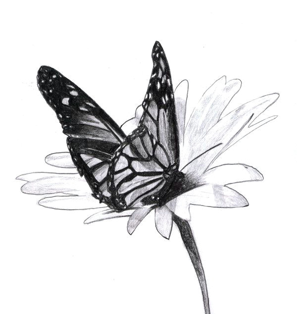 traditional pencil 2006 beautiful flower drawings pencil drawings of flowers beautiful butterflies