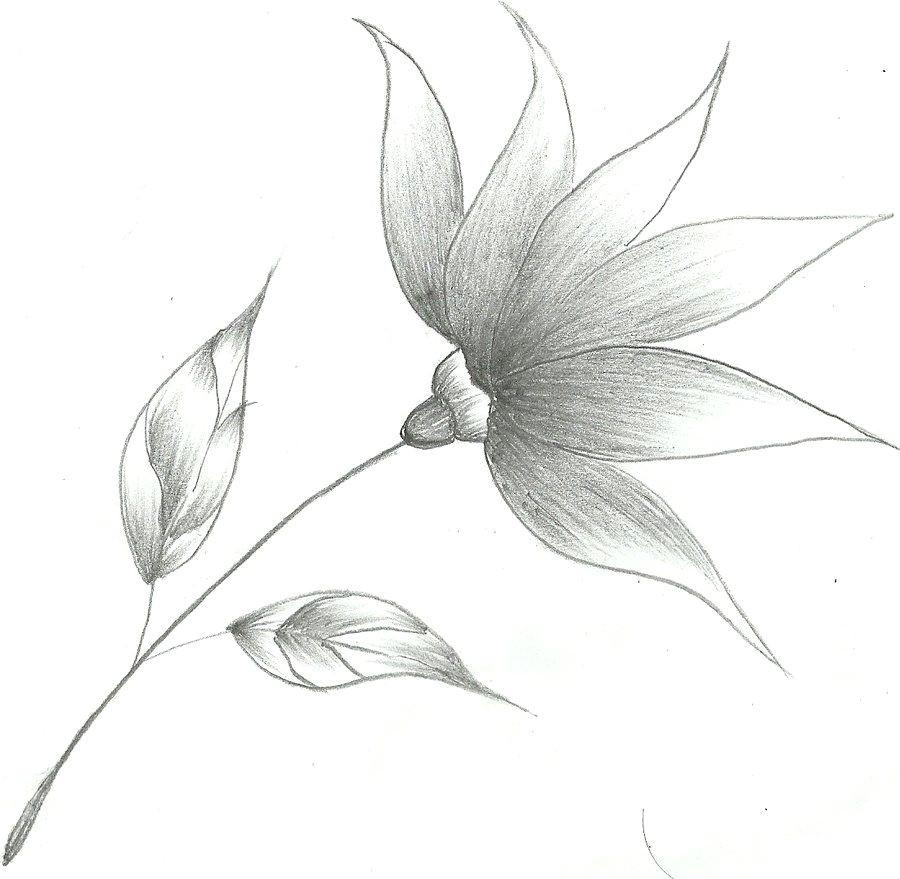 flower drawings flower sketch by mubibuddy on deviantart