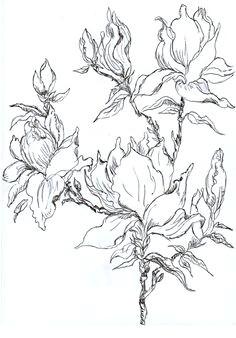 pen and ink magnolia sketch magnolia trees magnolia flower tree stencil stencils