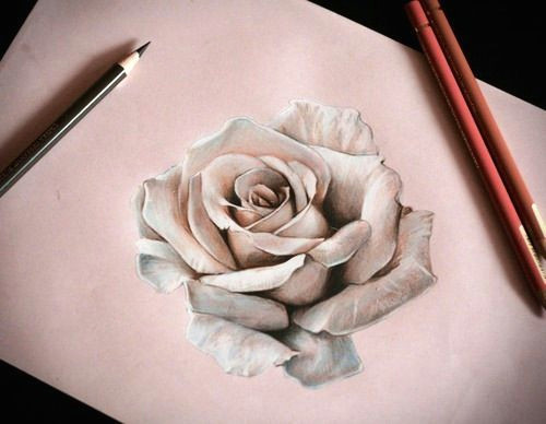 pretty 3d rose art sketch