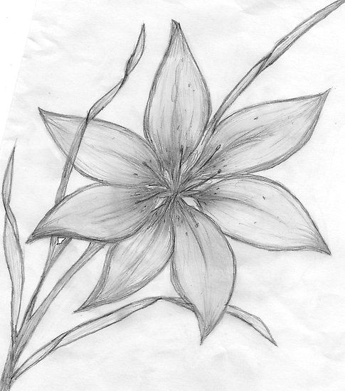 pencil drawings of flowers maebelle portfolio lily pencil drawing