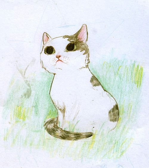 Pretty Drawing Of A Cat Beautiful Drawing Animals Pinterest Expressive Art Beautiful
