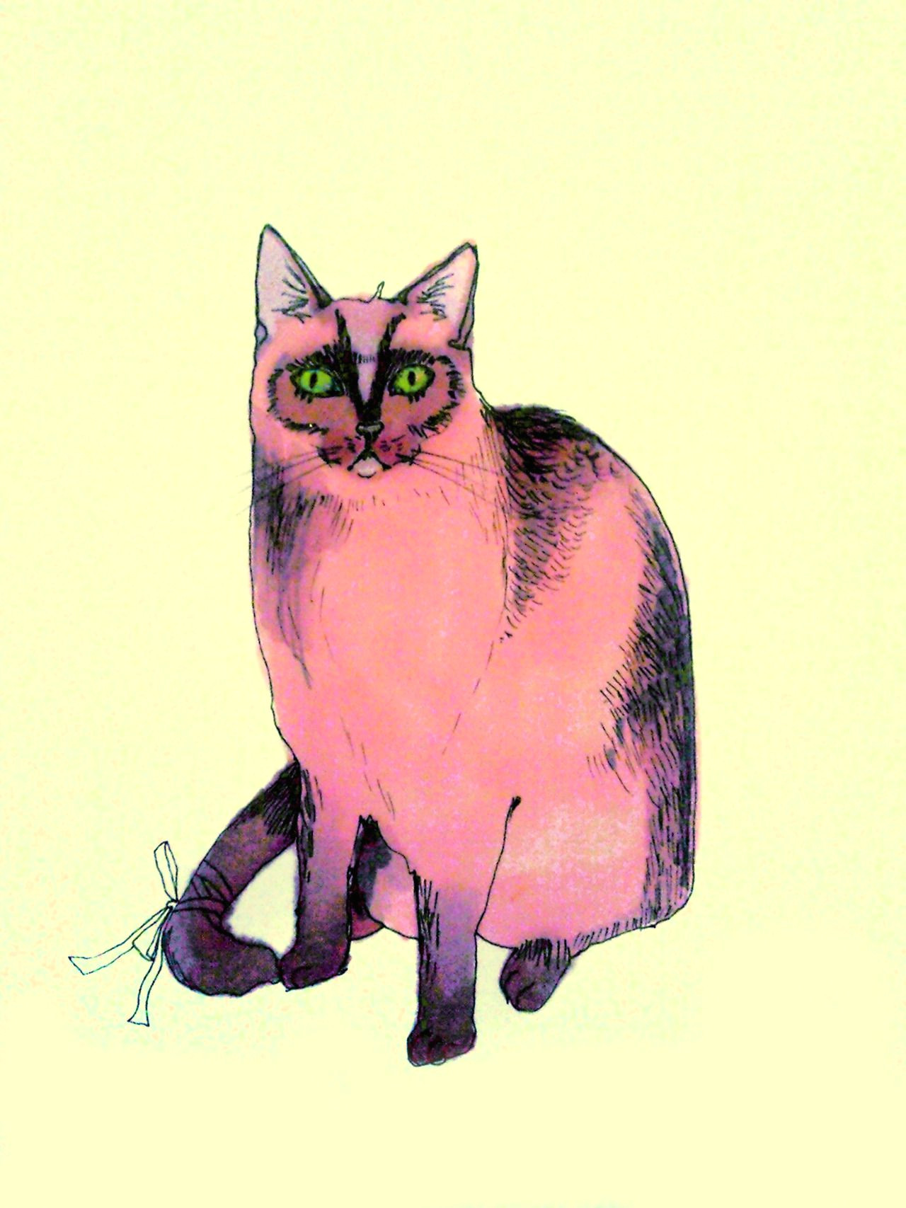 pink cat illustration sphynx cat pink cat cat paws cat drawing pretty