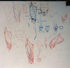 ramon alexander hurtado on instagram leg day all day safehouseatelier legs art muscle legday neverskiplegday anatomydrawing figure drawing