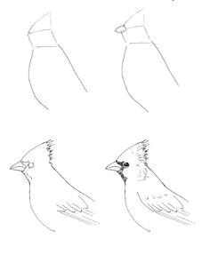 draw a cardinal art class ideas