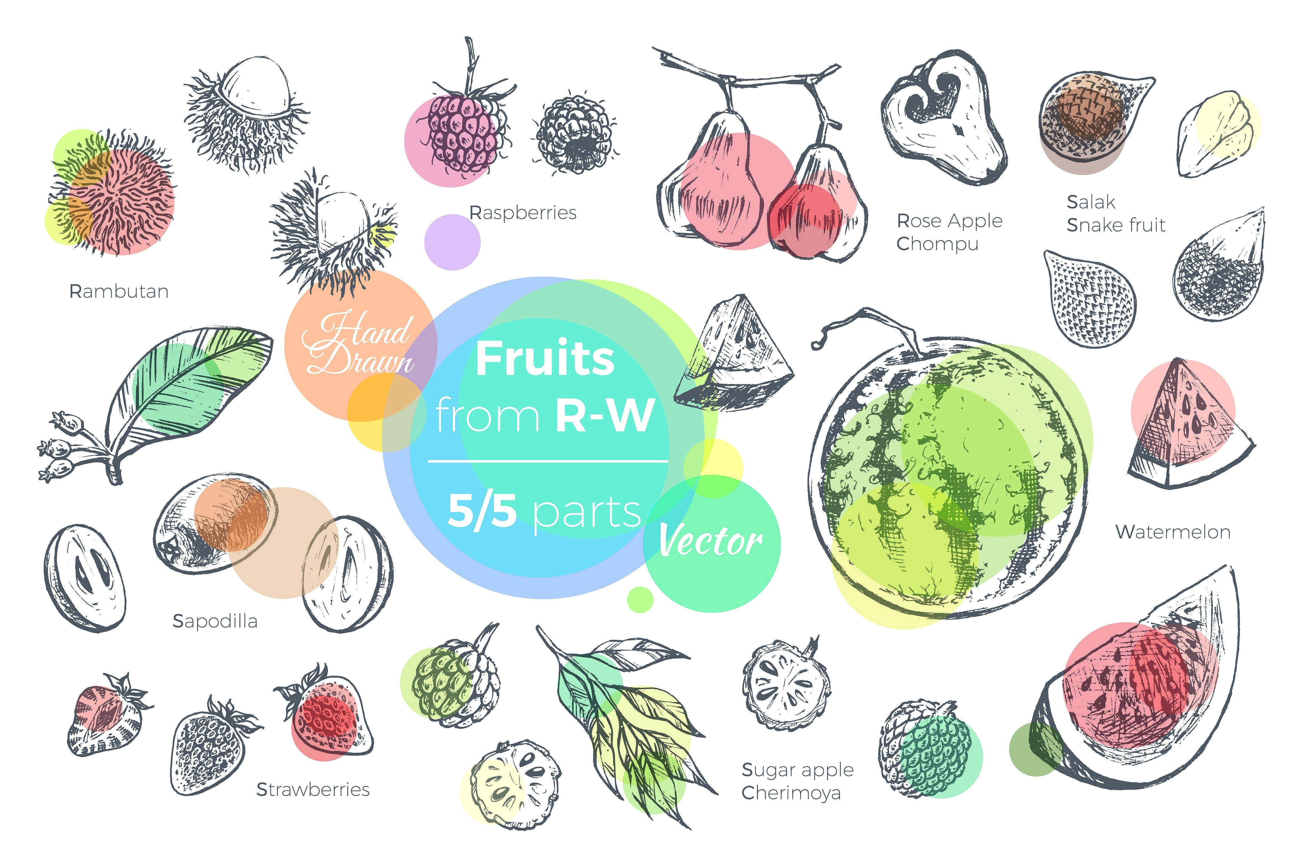 fruits hand drawn vector set exotic tropical vector packaging