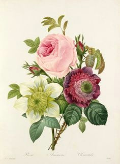 vintage flower bouquet illustration google search