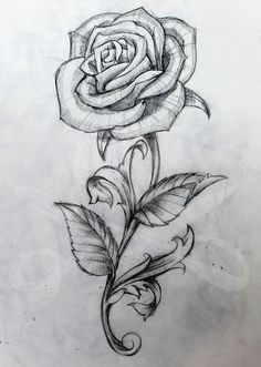 rose and stem