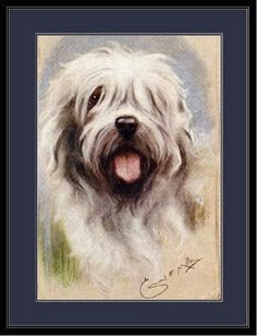 english picture print art of an old english sheepdog dog also i have a