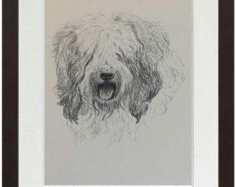 Sheepdog Drawing Old English Sheepdog Print Fine Art Print From 1935 Drawing by