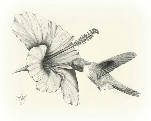 amazing pencil drawings flowers drawing sketch art wildlife bird hummingbird flower hibiscus pencil