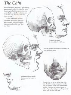 the chin drawing tutorial