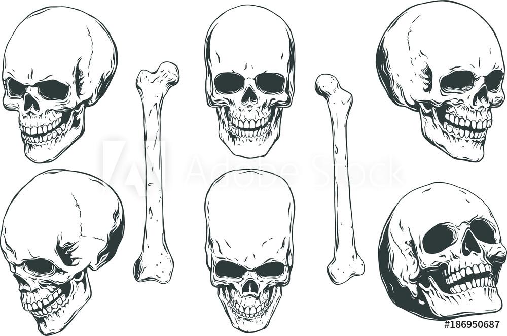 fotografija hand drawn realistic human skulls and bones from different angles na europosterji si