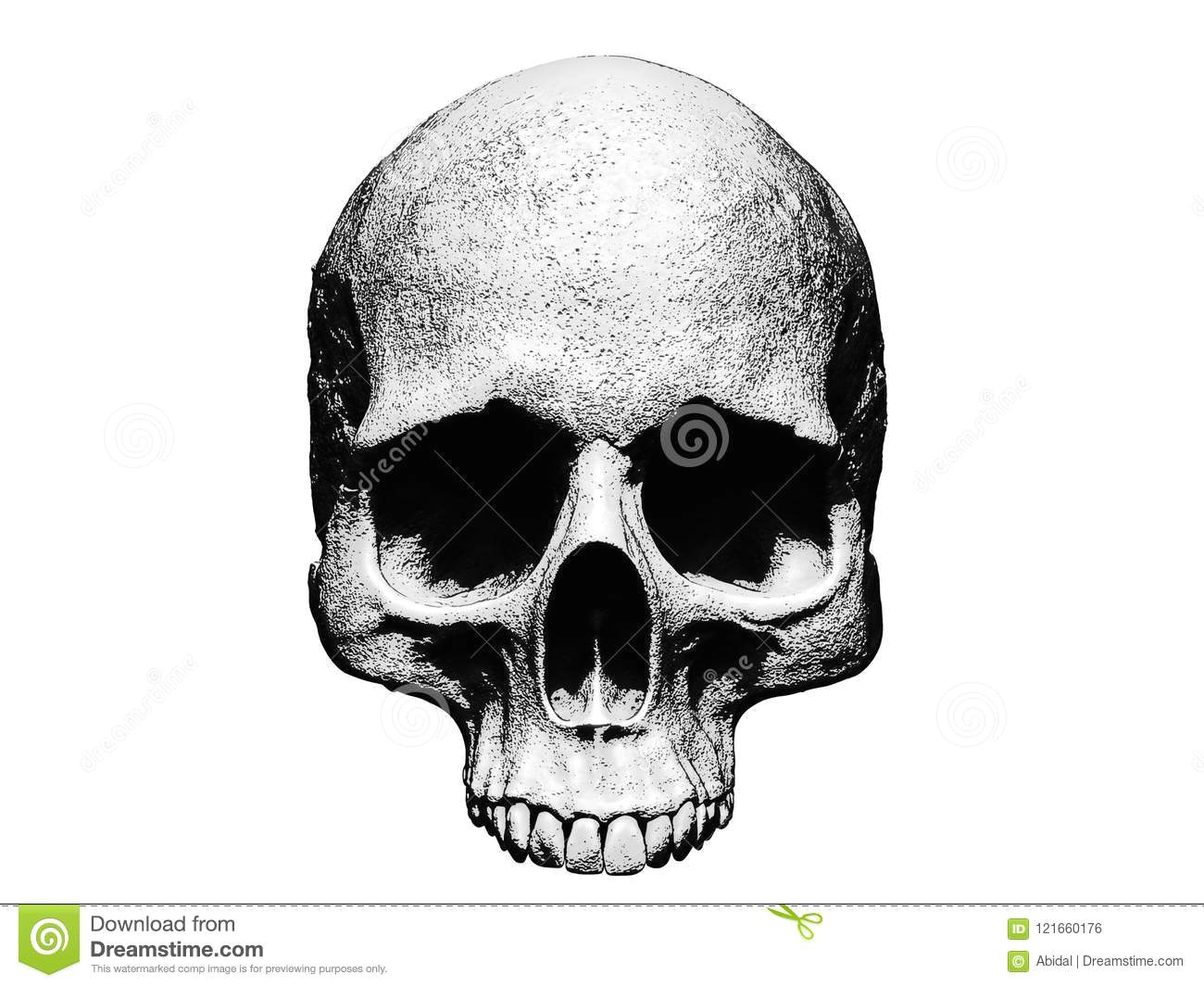 skull illustration isolated in white background drawing wallpaper
