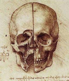 view of a skull 1489 leonardo da vinci skull anatomy head anatomy
