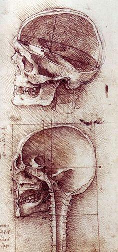 drawing of skull by leonardo da vinci