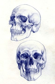 1000drawings pencil drawings skull drawings skull sketch tattoo drawings koi fish drawing