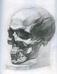 d d n d d n d n d n painting drawing life drawing figure drawing skull anatomy skeleton anatomy