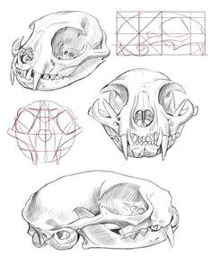 cat skull anatomy google search mas animal skull drawing