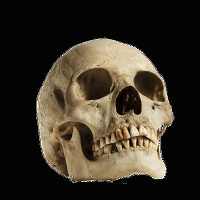 human skull looking up