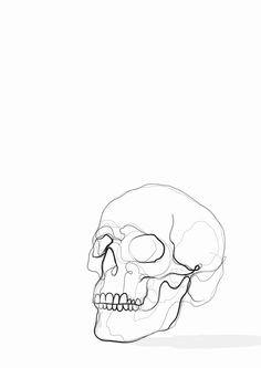 skull line drawing art print kerryn kisbey green line drawing art line drawings