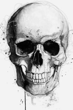 pirate tattoo skull illustration anatomy drawing
