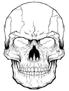 068 skull timelaspe