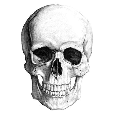 the classy killer pencil drawings art drawings drawings of skulls painting