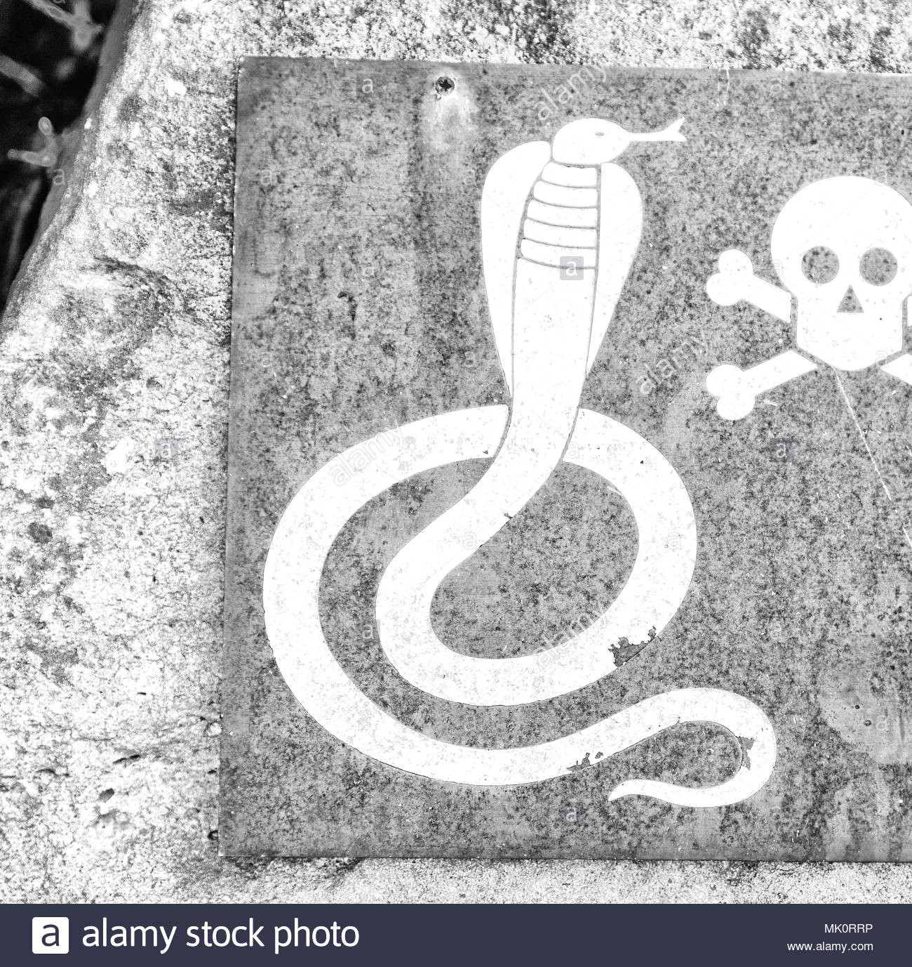 in south africa the metal signal of the danger for wild snake and the skull and