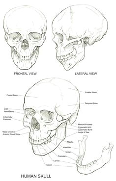 skull reference more