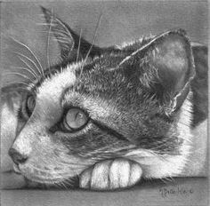 coloring for adults kleuren voor volwassenen still life drawing animal drawings pencil drawings