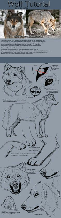 wolf tutorial by themysticwolf on deviantart much need i know it s not a pure white wolf but i still found it reliable to the board d