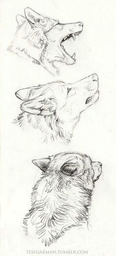 wolf pencil drawing drawing pinterest art reference character design cool drawings