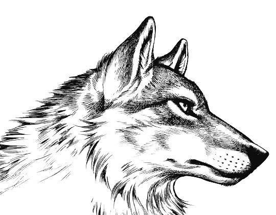 fur sketch ideas drawing ideas artwork drawings painting