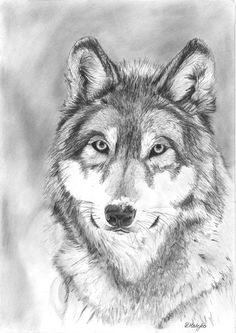 pencil portrait mastery original wolf pencil portrait drawing by hodkiart on etsy discover the secrets of drawing realistic pencil portraits