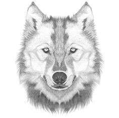 how to draw a wolf head step by step lesson click pic for video