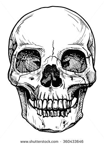 vector black and white illustration of human skull with a lower jaw in ink hand drawn style stock vector