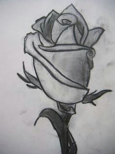 tonal drawing of a rose