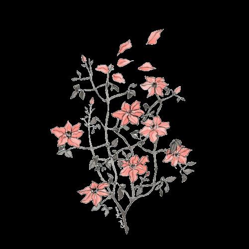 arabella flower drawing tumblr tumblr flower flower drawings black and white flowers