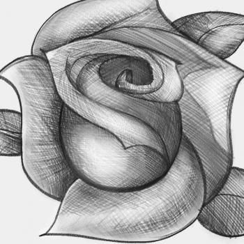 how to sketch a rose step by step sketch drawing technique free online drawing tutorial added by dawn april 16 2012 3 05 28 pm