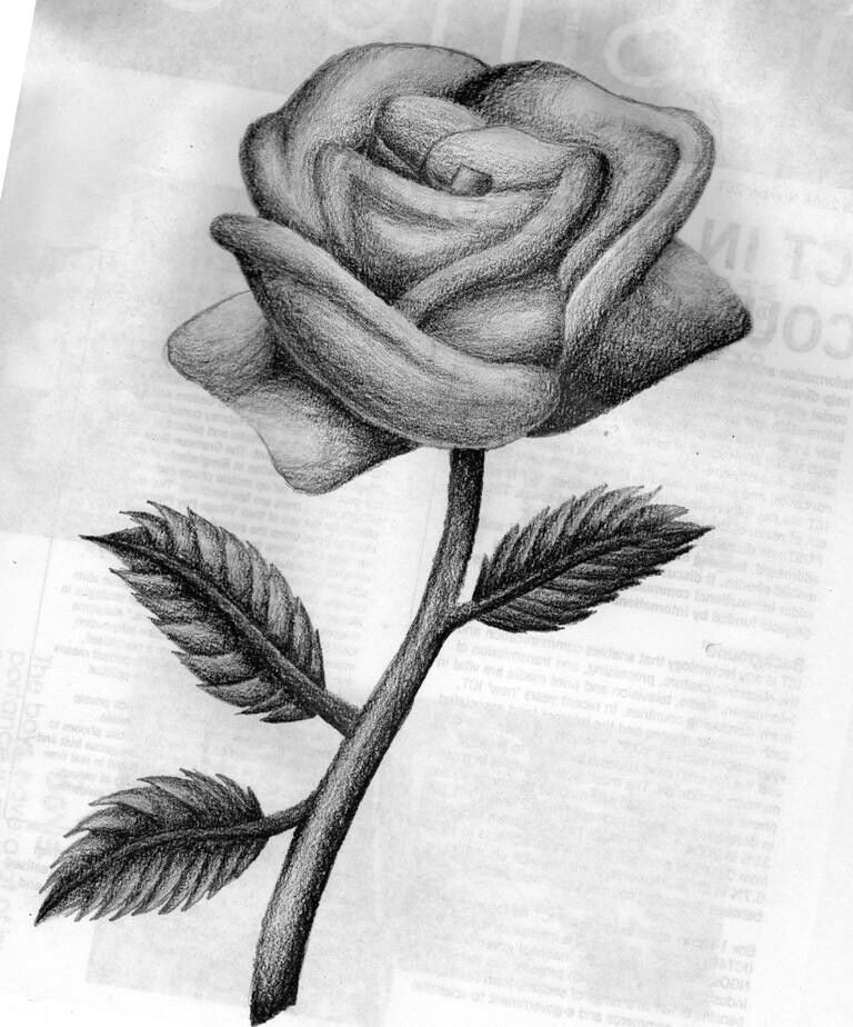 this was a quick rose sketch kind of i made an observation drawing on this rose as a base lol link and then just did the shading myself
