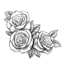 Types Of Roses Drawings Resultado De Imagen Para Three Black and Grey Roses Drawing Tattoo