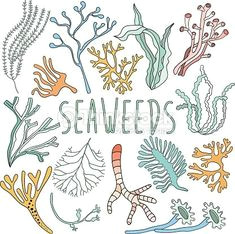 vessel outline painted image plant reef sea
