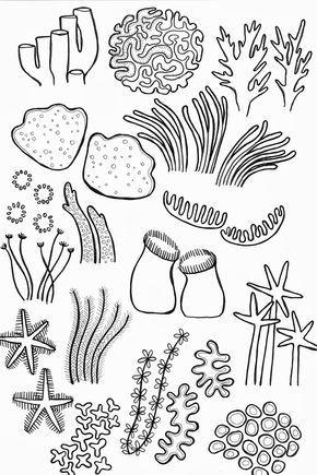 drawing underwater coral reef
