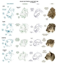 drawing tutorials drawing tips art tutorials tiger drawing tutorial drawing art