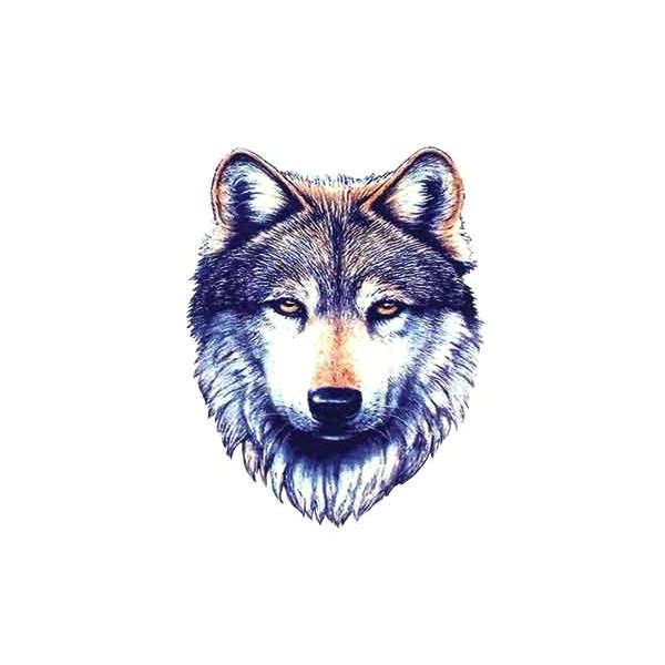 wolf tattoo a wolf tattoos tribal wolf tattoo a liked on polyvore featuring fillers animals drawings backgrounds art doodles quotes effects