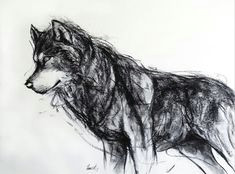 wolf charcoal drawing giclee art print by fiona tang drawing sketches art drawings wolf