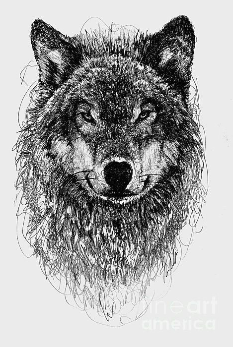 wolf scribble drawing