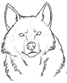 wolf head from behind draw google search pencil drawings tumblr drawings easy drawings